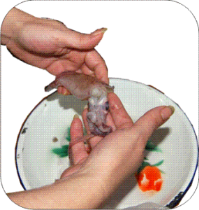 Limpiar calamares 1