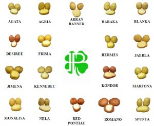 Variedad Patatas